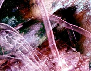 Mystical Line ©Alisa Cone Camberlan
