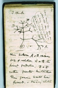 Tree of Life. A reproduction of the first-known sketch by Charles Darwin of an evolutionary tree describing the relationships among groups of organisms.© By permission of the Syndics of Cambridge University Library.