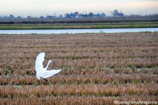 Delta de l'Ebre ©Carme Miró
